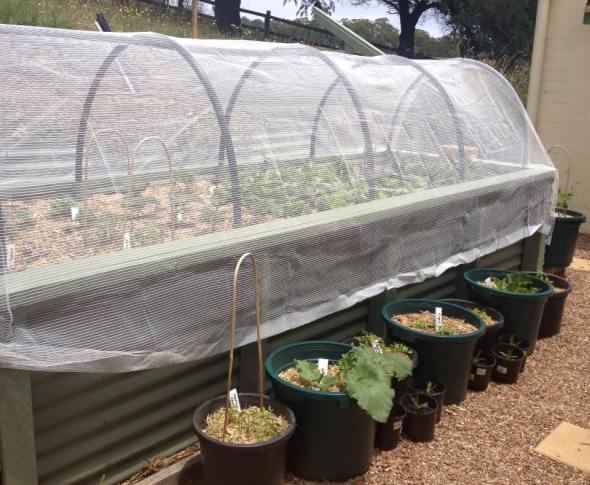 Veggie Garden - Sunday Musings