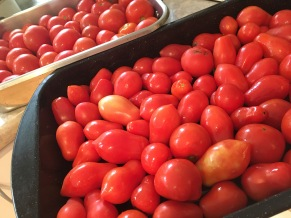 Tomatoes - Sunday Musings